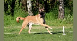Hundeschule-Rheinauenwölfe Böhl-Iggelheim
