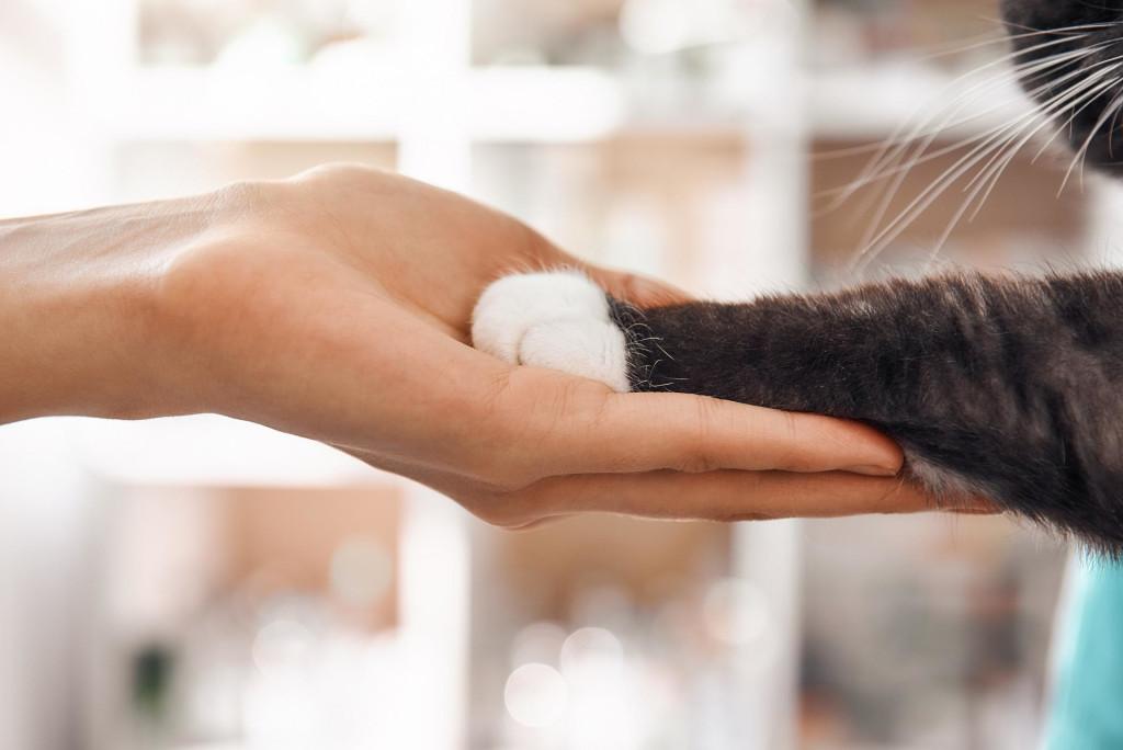 Bild der Tierarzthotline