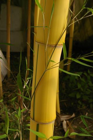▷ bambus willumeit gartenbau gmbh ✅ | tel. (06151) 5380, Garten ideen