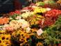 Blumen Flores Dirk Schmidt Hamburg