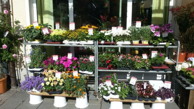 ▷ Blumen Maaß | Tel. (089) 3495... ☎ Öffnungszeiten
