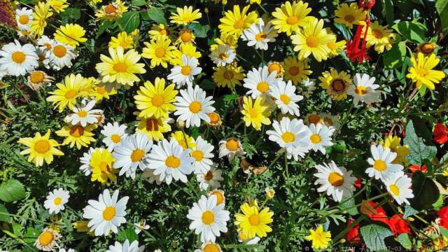 Botanischer Garten Tel 0251 83238 Bewertung