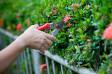 Garten- und Landschaftsbau Aridi Essen