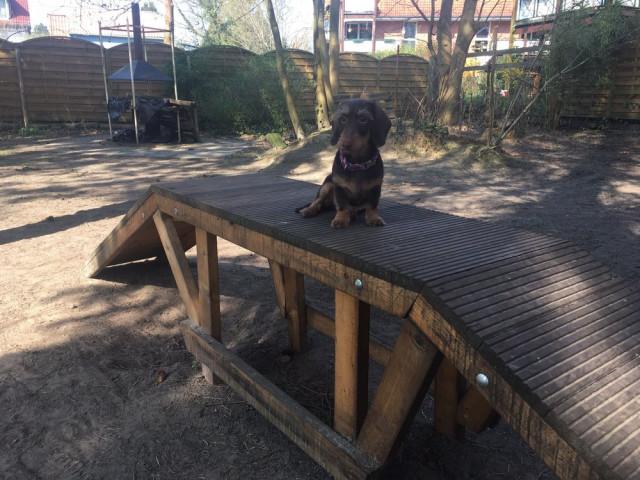 Gut Erzogene Hunde Labbiland Hundeschule Hundepension Sabine Braun Birkenwerder Strasse 10 16562 Bergfelde Tel 0 33 03 21 57 30 Tel 01 73 9 26 80 82