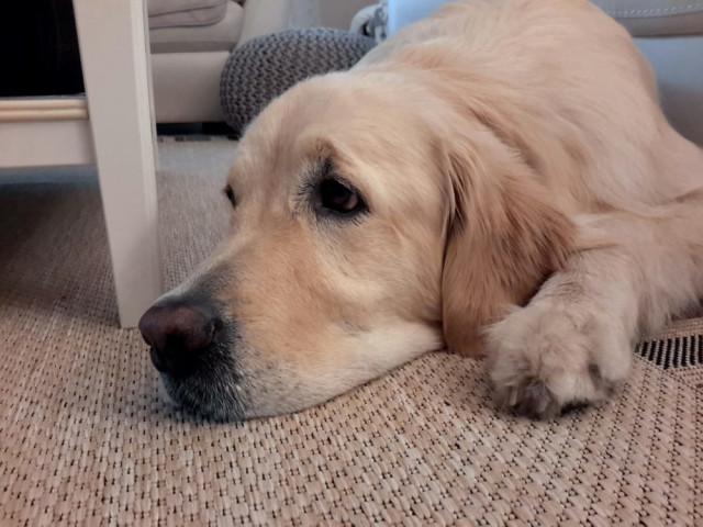 Labbiland Hundeschule Hundepension Hundezucht Sabine Braun Hohen Neuendorf Offnungszeiten Telefon Adresse